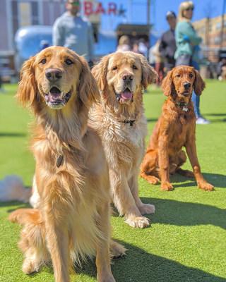 Pups enjoying the sun at Fetch